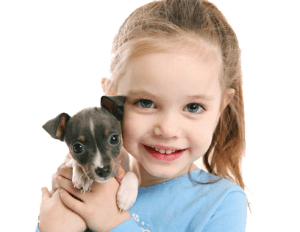 Puppy Training - Dog Trainer St Louis MO, Dog Trainer St Charles MO